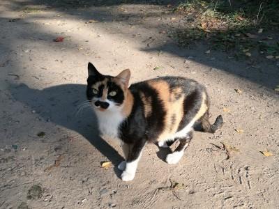 Prisidėkite prie kačių sterilizacijos